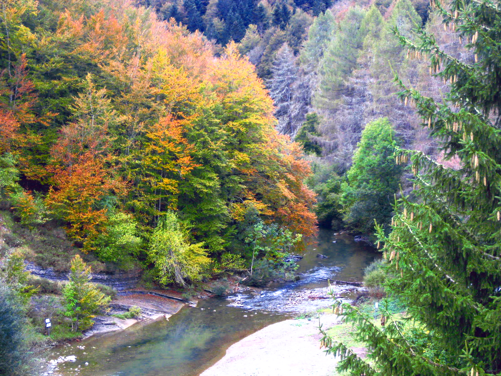Selva-Irati-otoño-Navarra-excursiones-guiadas